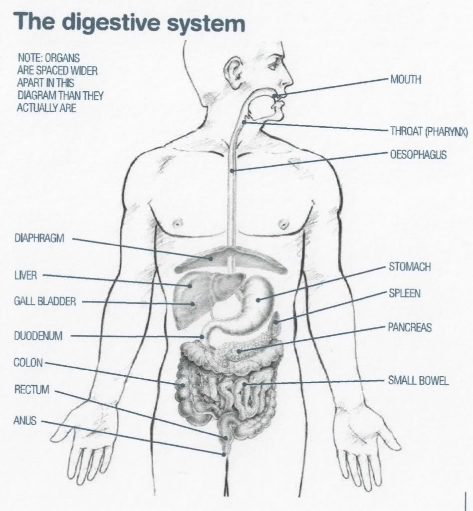 Your Digestive System Part 1 Misunderstood Under Appreciated