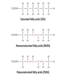 Fatty Acids jpeg