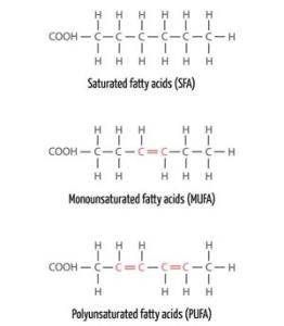Fatty Acids jpeg
