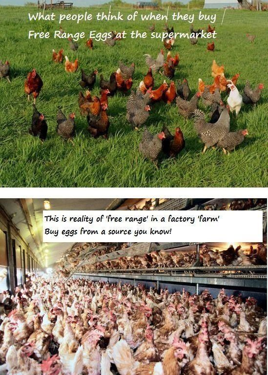 Pastured Free-Range vs Factory Farmed