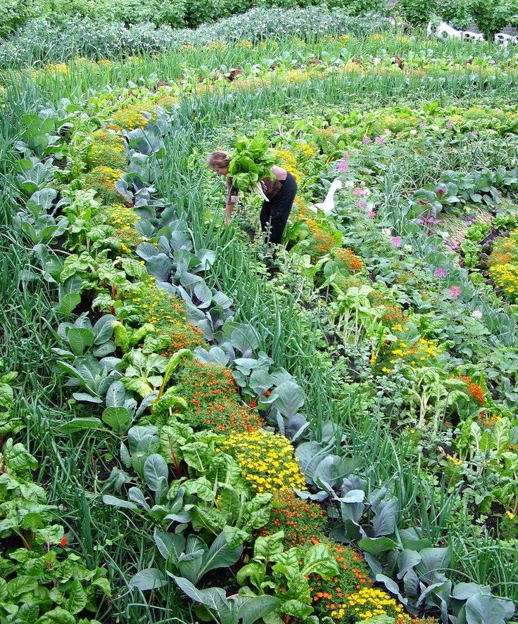 PolyCulture Farming