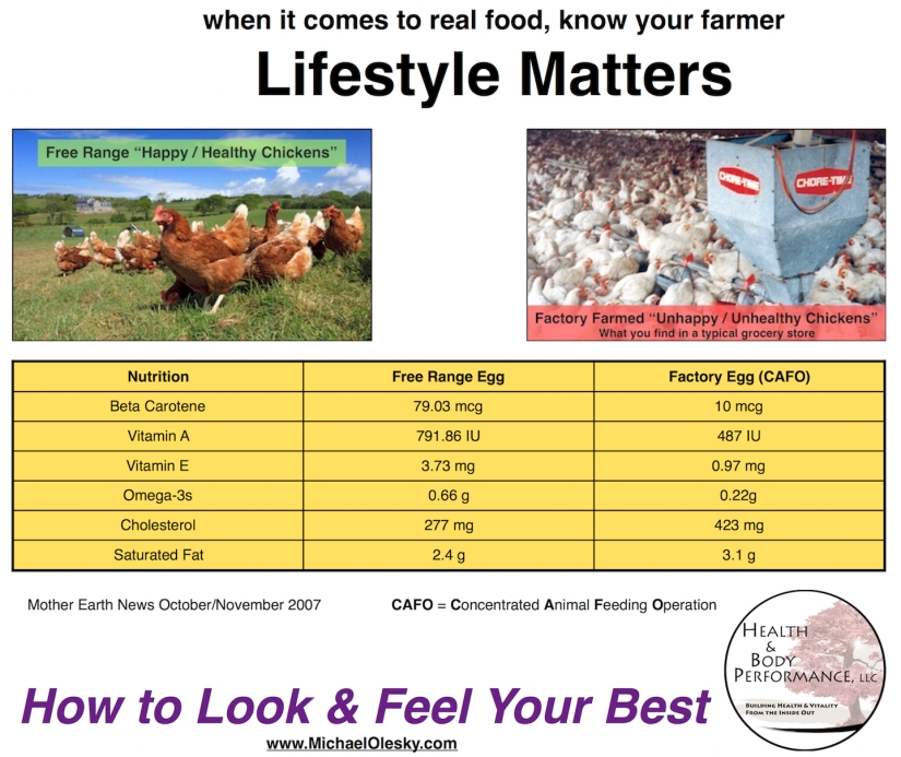 Lifestyle Matters - Chicken Eggs Meme sm