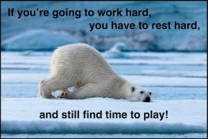 resting-bear-meme-jpg